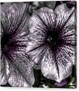 Dirty Flowers 4 Canvas Print