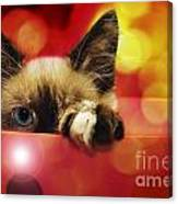 Disco Kitty 1 Canvas Print