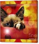Disco Kitty 2 Canvas Print
