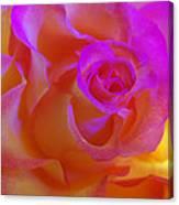 Disco Rose   Canvas Print
