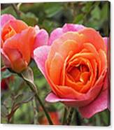 Disneyland Roses Canvas Print
