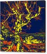 Dried Up Tree Canvas Print