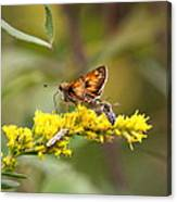 Diversity - Insects Canvas Print