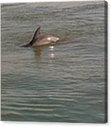 Diving Dolphin Canvas Print