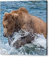 Diving For Salmon Canvas Print