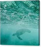 Diving Turtle Canvas Print