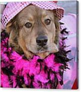 Do You Like My Pink Hat Canvas Print