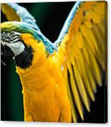 Do Your Exercise Daily Blue And Yellow Macaw Canvas Print