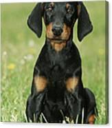 Doberman Pinscher Puppy Canvas Print
