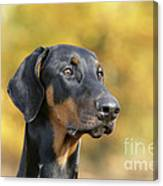 Dobermann Dog, In Autumn Canvas Print
