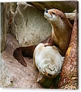 Doctor Otter At The Western North Carolina Nature Center Canvas Print