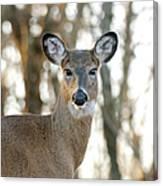 Doe A Deer A Female Deer Canvas Print