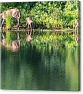Doe And Fawns At The Pond Canvas Print