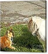 Dog And Cat Discuss Canvas Print
