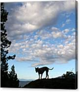 Dog And Sky Canvas Print