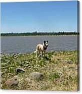 Dog At The Lake Canvas Print