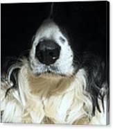 Dog Close Up Canvas Print