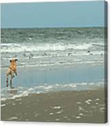 Dog Day Beach Canvas Print