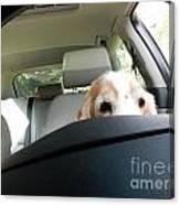 Dog Driving A Car Canvas Print