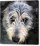 Dog Head Canvas Print