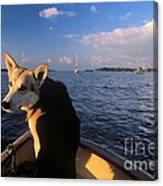 Dog In A Dingy At Put-in-bay Harbor Canvas Print