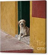 Dog In Colorful Mexican City Canvas Print