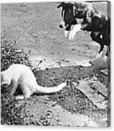 Dog Jumping On An Unsuspecting Kitten Canvas Print