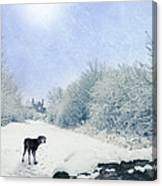 Dog Looking Back Canvas Print