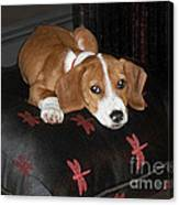 Dog - Mr. Oliver Relaxing Canvas Print