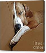 Dog - Mr. Oliver Snoozing Canvas Print
