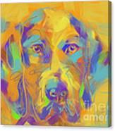 Dog Noor Canvas Print