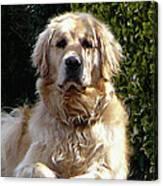 Dog On Guard Canvas Print