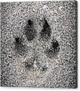 Dog Paw Print In Sand Canvas Print