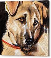 Dog Portrait Drawing Canvas Print