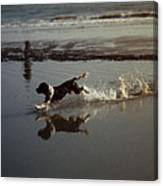 Dog Running Canvas Print