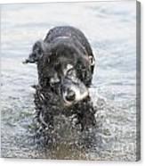 Dog Shake Canvas Print