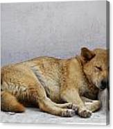 Dog Sleeping Canvas Print