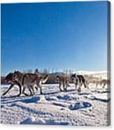 Dog Team Pulling Sled Canvas Print