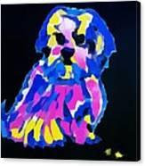 Dog-tibetin Lhasa Apsos Impression Canvas Print
