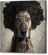 Dog With A Crazy Hairdo Canvas Print