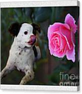 Dog With Pink Rose Canvas Print