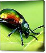 Dogbane Beetle Canvas Print