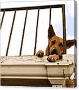 Doggie Down Time Canvas Print