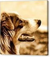 Doggie Face Canvas Print