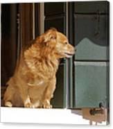 Doggie In The Window Canvas Print