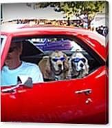 Doggies In The Window Canvas Print
