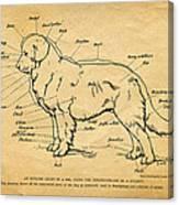 Doggy Diagram Canvas Print