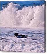 Dogs At Carmel California Beach Canvas Print