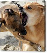 Dogs Fight On The Beach In Emerald Canvas Print