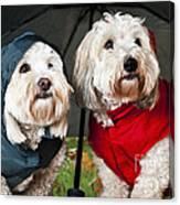 Dogs Under Umbrella Canvas Print
